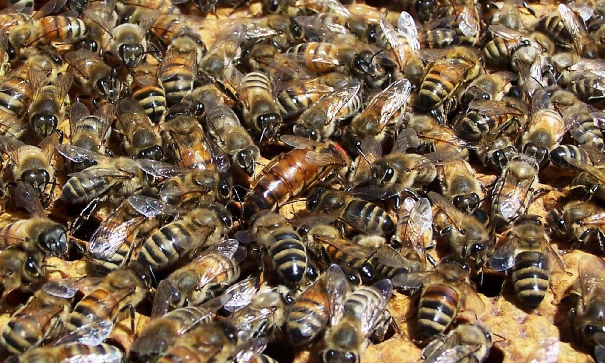 Honey Bee Removal Alabama